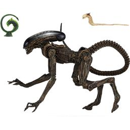 Ultimate Dog Alien Action Figure 23 cm