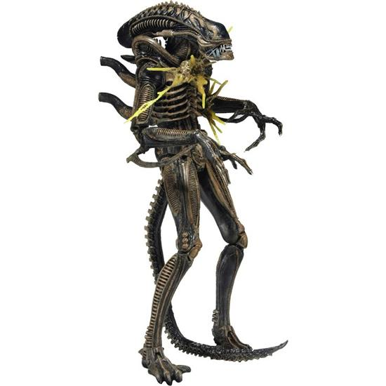 Alien: Brun Xenomorph Warrior Battle-Damaged